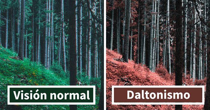 Qué es el daltonismo?¿tiene cura? | González Costea